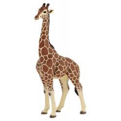Giraf han - Figur - Papo
